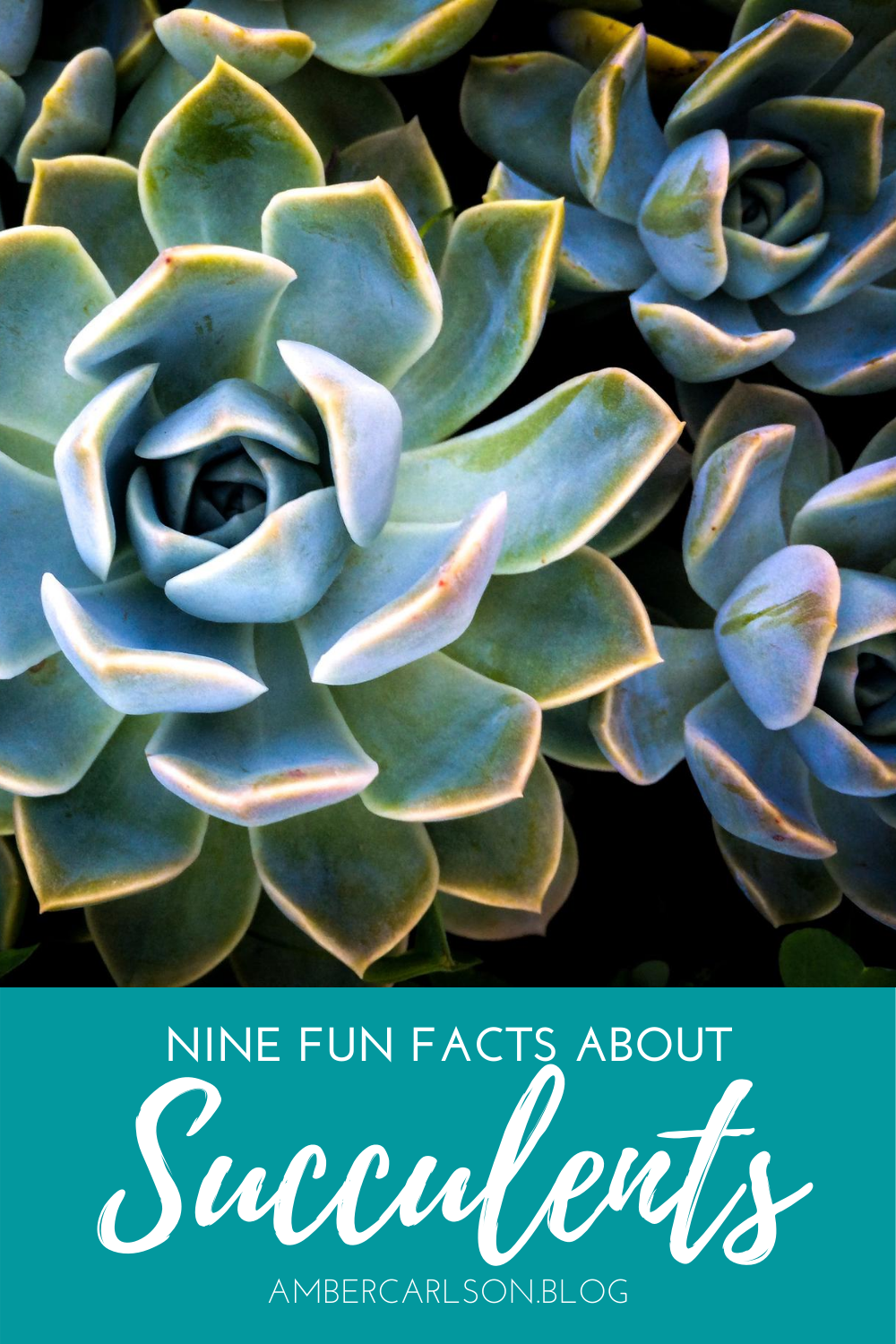Love succulents? Here are nine facts you might not have known about these unique plants. #gardening #funfacts